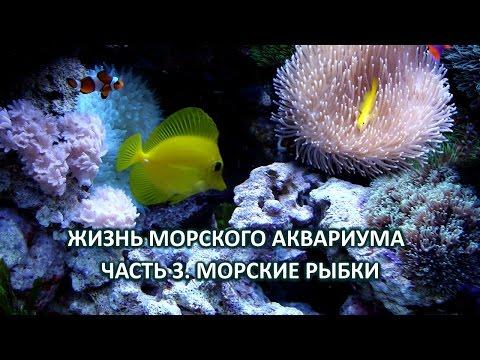 Жизнь морского аквариума. Часть 3. Морские рыбки