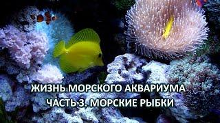Жизнь морского аквариума. Часть 3. Морские рыбки(Видео знакомит зрителя с правилами подбора рыб для морского аквариума с мягкими кораллами. Описываются..., 2016-05-01T17:57:54.000Z)