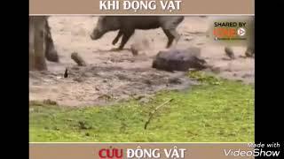 Cảm động khi động vật cứu động vật thoát khỏi cái chết