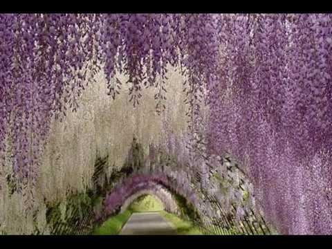 Los 10 t neles de arboles mas extraordinarios del mundo for Arboles de jardin fotos