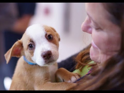 Snuggle Delivery Relieves Workplace Stress With Puppies