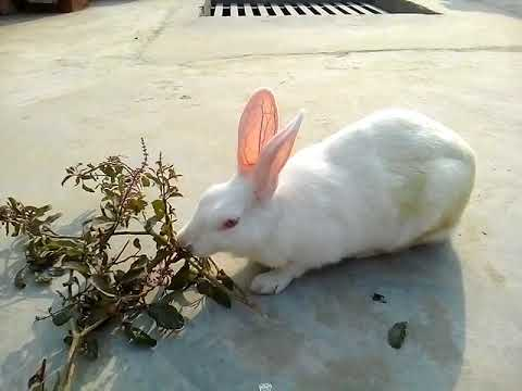 what kind of food do rabbits eat ?