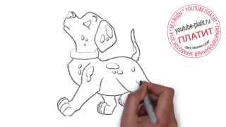 Смотреть онлайн 101 далматинец  Как просто нарисовать собаку далматинца поэтапно