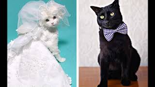 Кошки в платьях