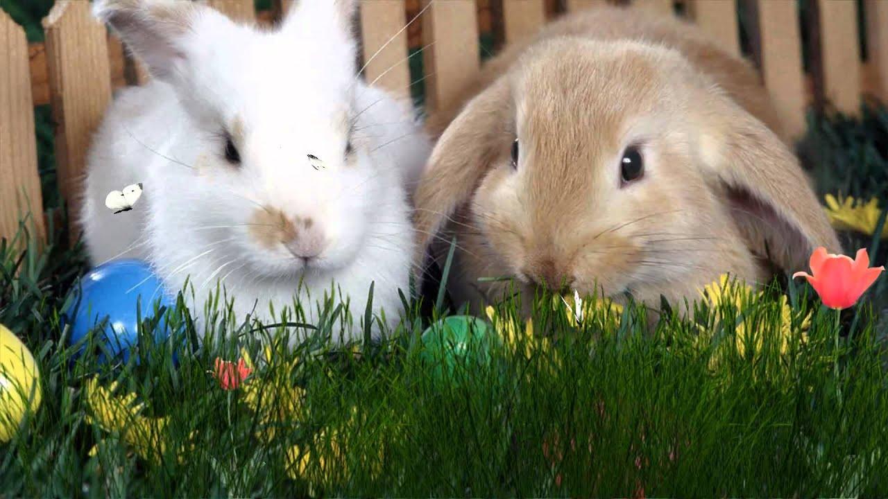 Ostern Hintergrundbilder Kostenlos easter bunny wallpaper http desktopanimated com