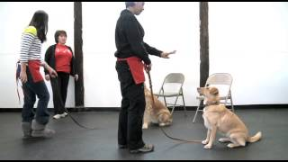 The Canine Academy At Pet-n-play Luxury Resort