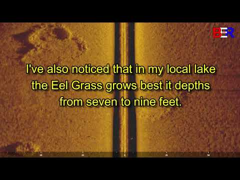 Scanning For Eel Grass