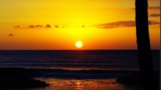 [LIVE] 勝利の酒を飲みながら地獄のハワイ旅行感想&振り返り配信