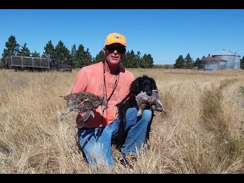 2017 Montana Sharptail Grouse Hunting