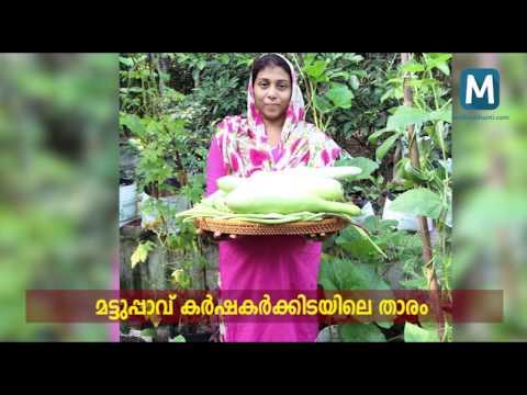 Terrace farming- Simi Shaji