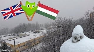 Duolingo English-Hungarian tree complete (side effect: grown owlhead, 2018 home video)
