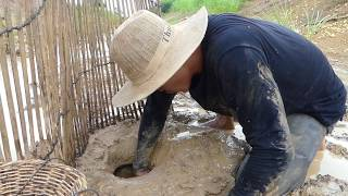 National Fishing - Catfishes & Mud fishing Use Bamboo fishing trap & two Clay pot by A Fisher man