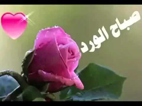 احلة صباح احلة حبيبتي الغالية Youtube