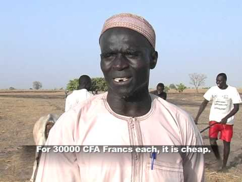 USAID Introduces the Ripper: a Unique Farming Tool for Senegal