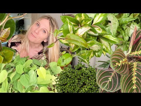 "HANGING INDOOR PLANTS!  COME ""HANG"" WITH ME AND 43 OF THE BEST PLANTS TO HANG IN YOUR HOME"