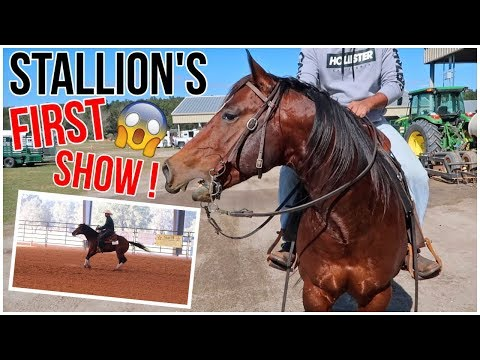 OUR STALLION'S FIRST HORSE SHOW!