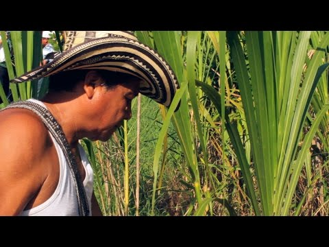 Departement of Cordoba Colombia (Part 1) - TvAgro por Juan Gonzalo Angel