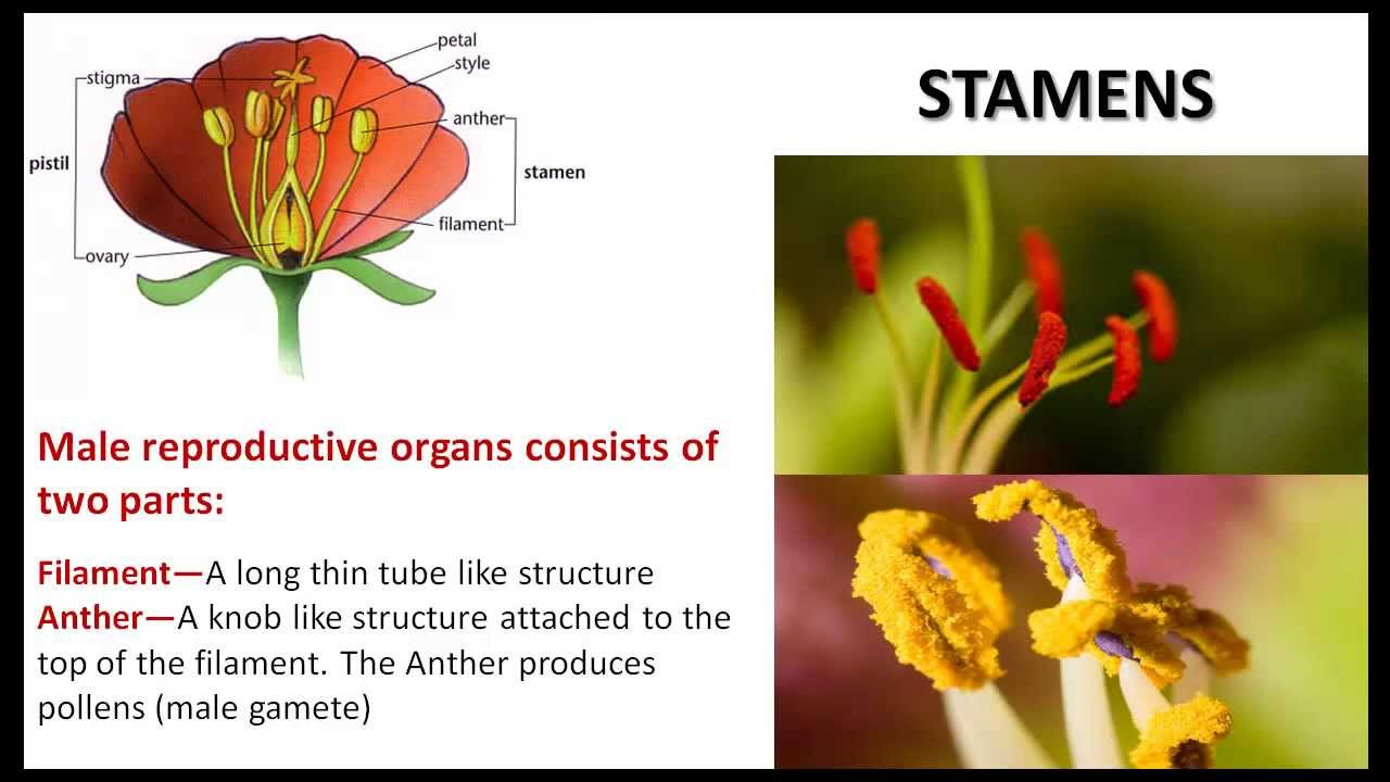 Plant Life - CBSE NCERT Science