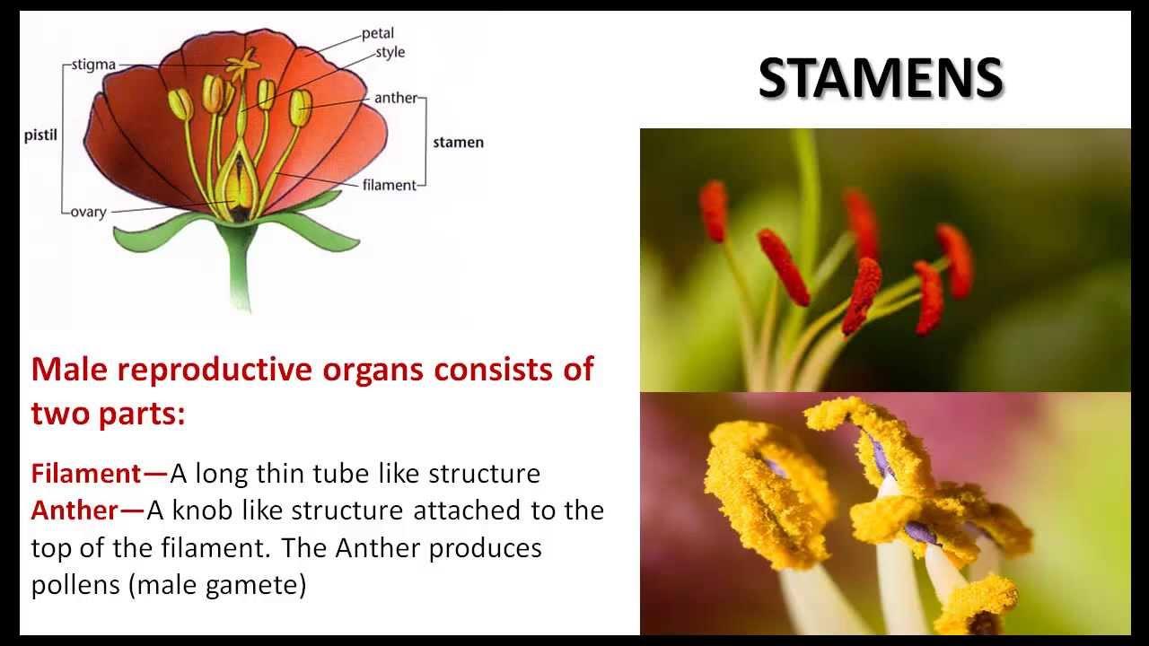 Plant life cbse ncert science youtube izmirmasajfo