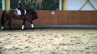 Dressage Horse for sale - 3 year old Riccio Gelding