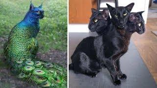 Top 10 Gatos ANORMALMENTE Extraños