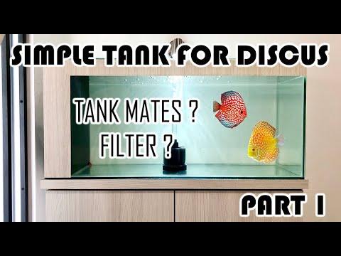 SIMPLE TANK SETUP FOR DISCUS FISH (INTERNAL SUMP FILTER) Aquarium sederhana untuk ikan discus