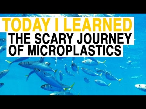 TIL: From Fleece Jackets to Your Food: The Scary Journey of Microplastics | Today I Learned