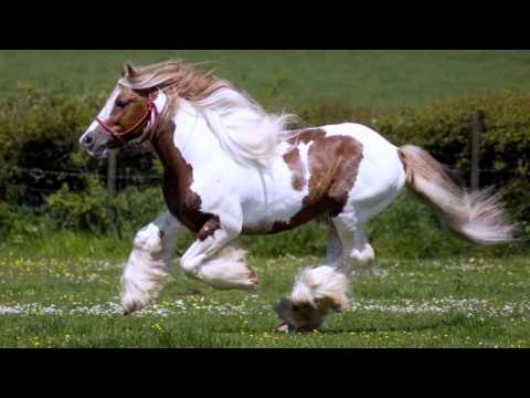 Лошадей скачать видео.