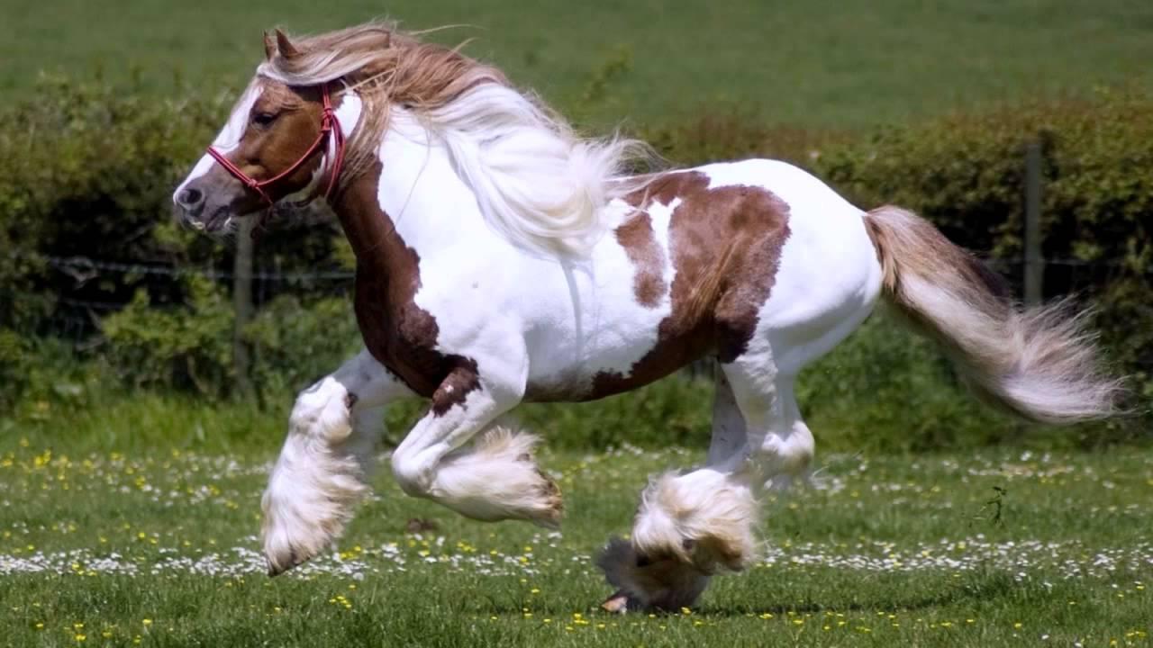 красивые лошадки картинки