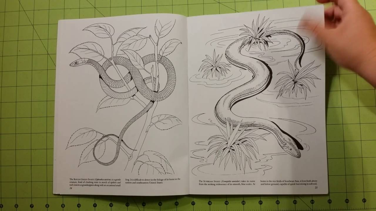the snakes of the world dover coloring book review flip through