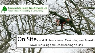 On Site - Crown Reducing and Dead wooding an Oak - Hollands Wood Campsite, New Forest