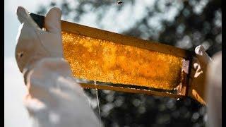 Մեղրի և հատապտուղների փառատոն Տավուշում