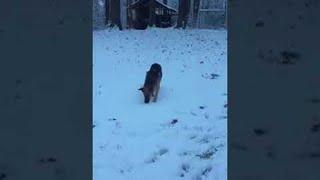 First Snow Experience     ViralHog