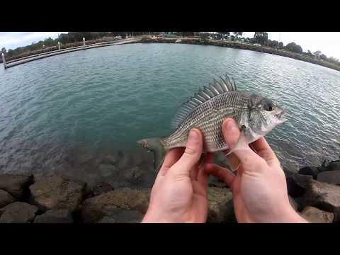 (MELB) Newport Fishing On Light Gear (MELB)
