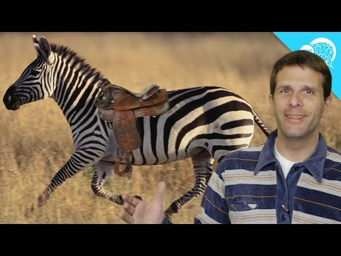 why-don't-humans-ride-zebras?