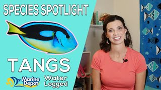 How to Care for Tangs! Species Spotlight With Hilary