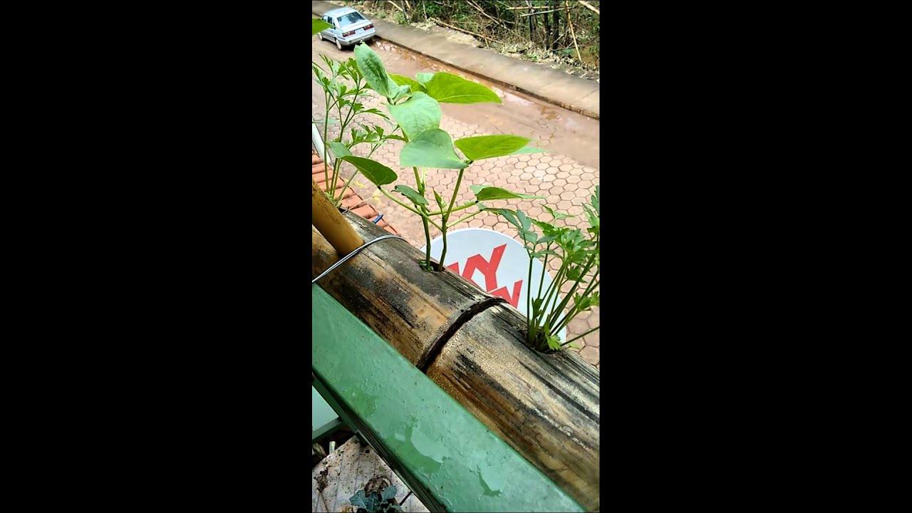 Well-known Horta vertical bem bambu - YouTube GD26
