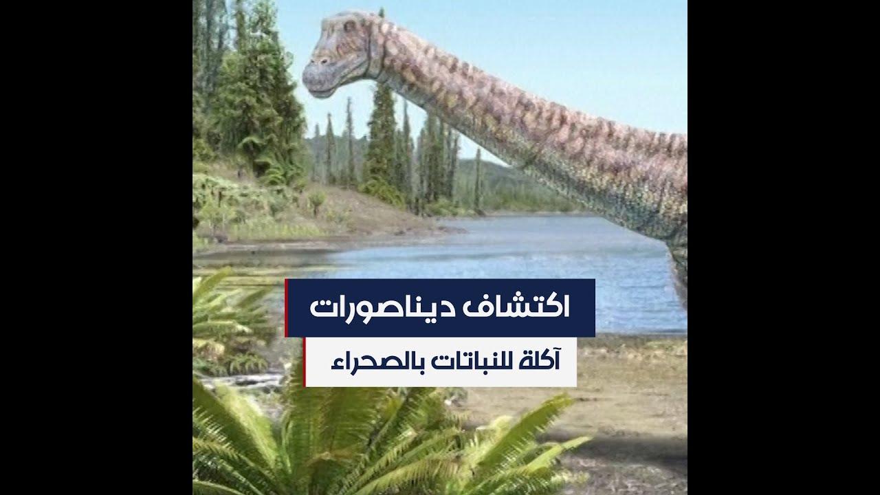 وسط الصحراء الأكثر جفافا بالعالم.. اكتشاف بقايا ديناصورات آكلة للنباتات  - نشر قبل 13 ساعة