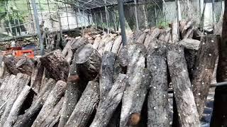 강참나무에 표고버섯종균…