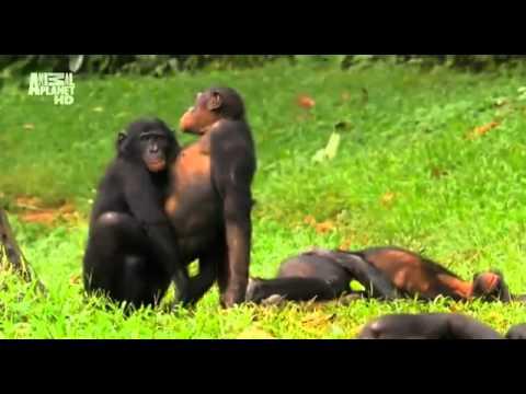 Суть женской логики обезьяны  Приколы