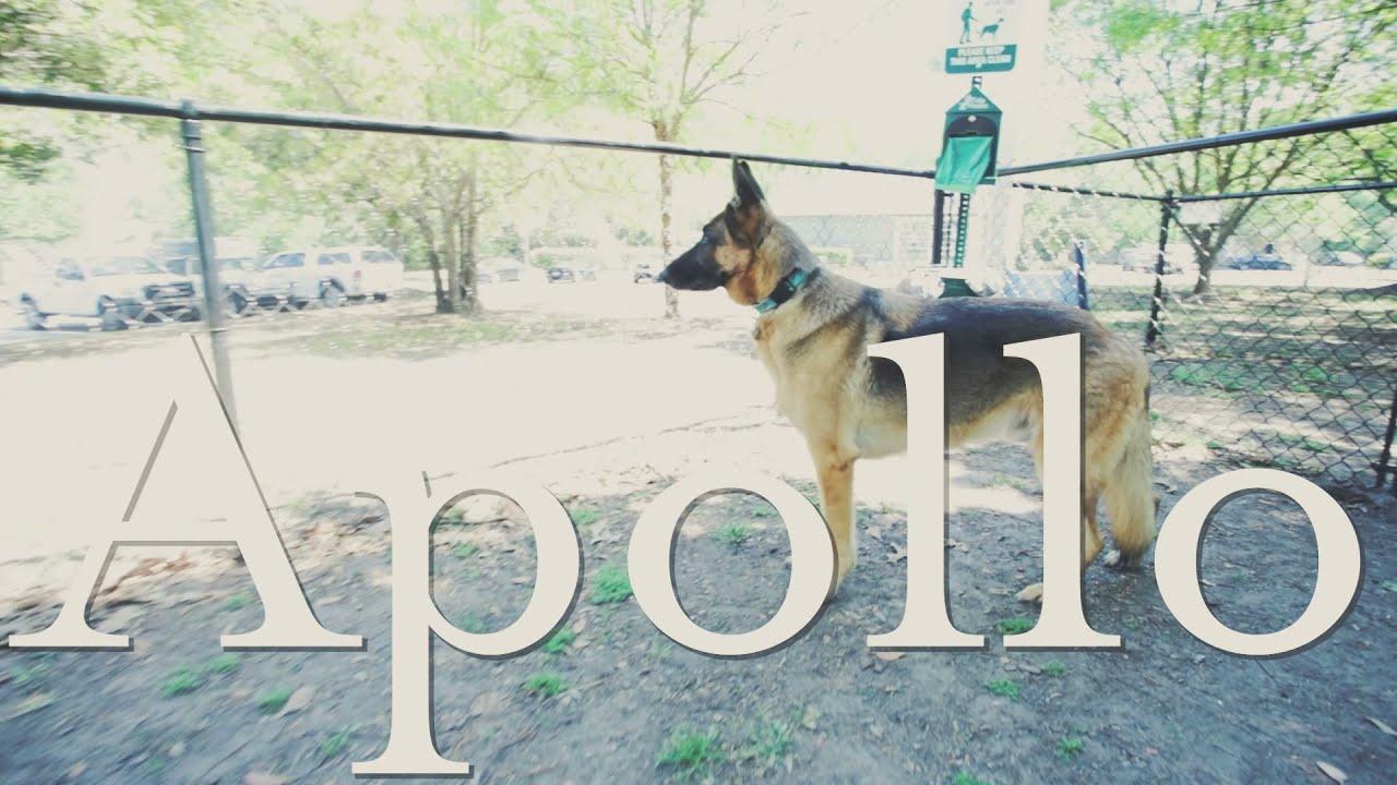 Apollo's Last Day - Short Film