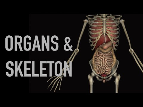 Human Organs & Skeleton - Black Background - YouTube