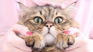 The very best and funniest CAT moments - Funny cat compilation