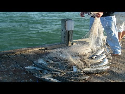 Amazing Big Cast Net Fishing - Traditional Net Catch Fishing in The River