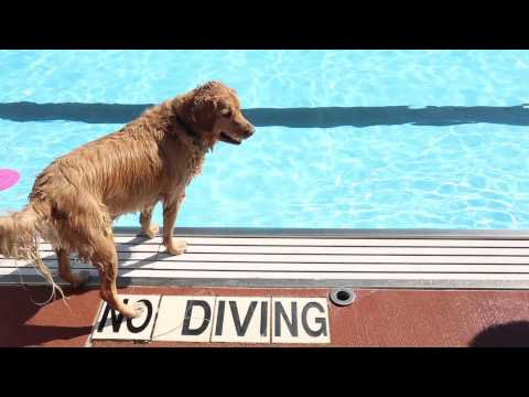 Watch: Dogs' free for all swim at Buhr Park Pool