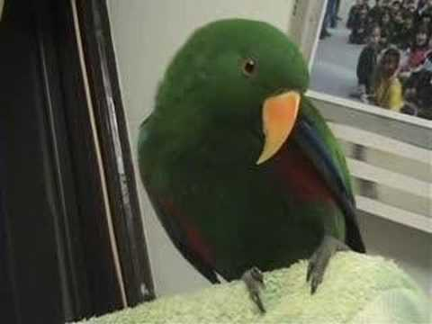 Riley the Amazing Talking Parrot - Best Bits