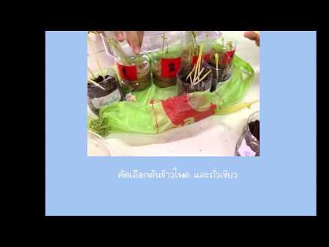SB student plant lab