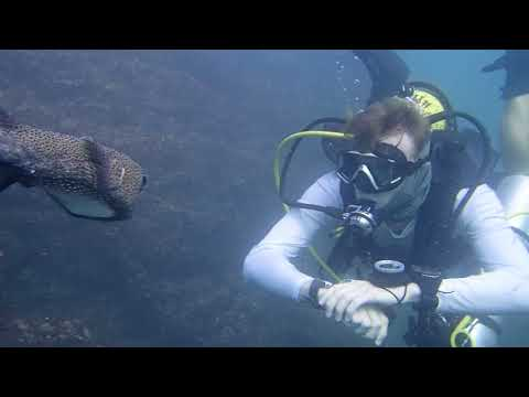 The Self Reliant Diver course