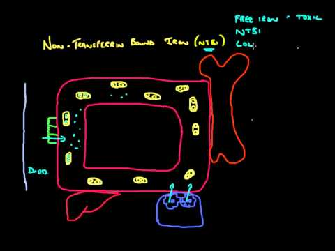 non-transferrin-bound-iron-(ntbi)---a-quick-overview-(ntbi-part-1)