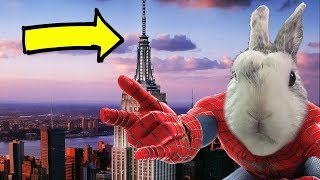 ***SPIDER-BUN in NYC*** ((ep #2))